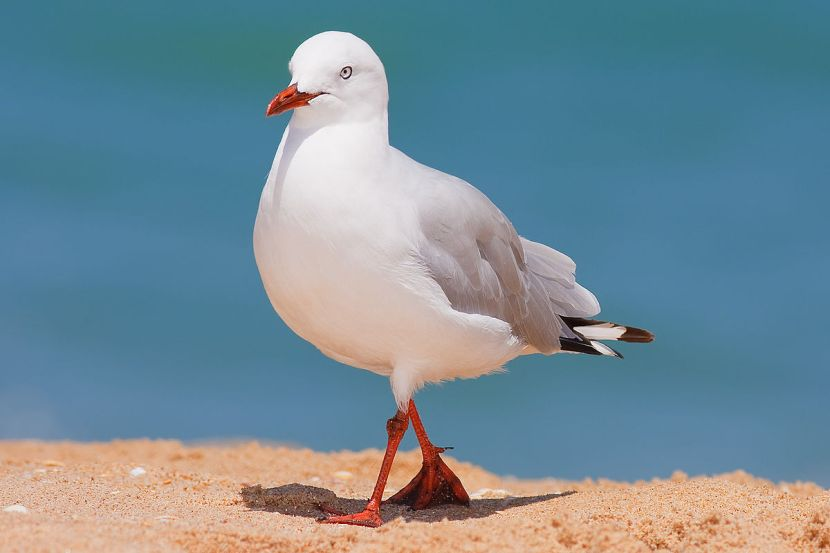 Be a disruption seagull; you don't need to know where the fish are, you just have to follow theboat.